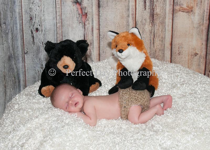 Zachary's Newborn Session
